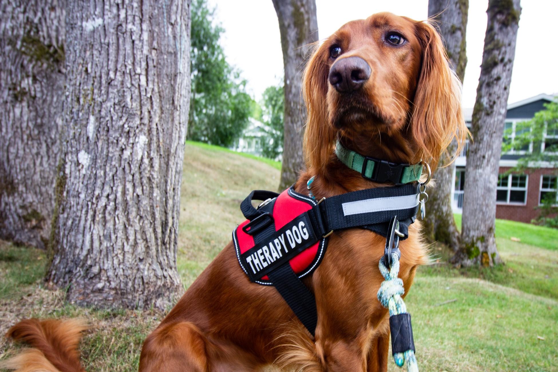 La Pet Therapy:  I nostri eroi a quattro zampe